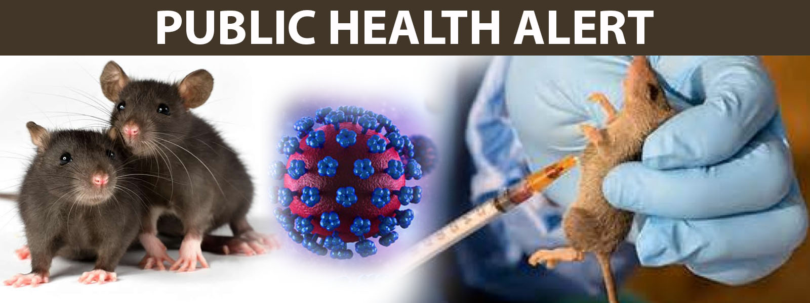 Public Health Alert: All you need to know about Lassa Fever
